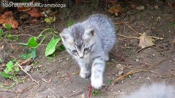 Смотреть Робкие котята