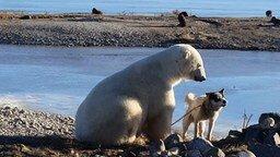 Дружба пса и полярного мишки смотреть видео прикол - 0:35