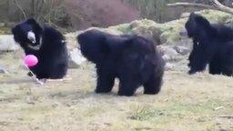 Смотреть Шарик с гелием и медведи