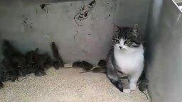 Смотреть Безразличная кошка и куча мышей