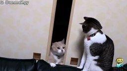 Смотреть Чудные кошки и коты