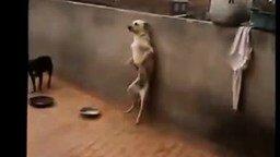 Непроизвольный собачий танец смотреть видео прикол - 1:07
