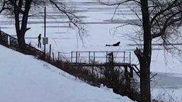 Смотреть Парень спас собак, провалившихся под лёд
