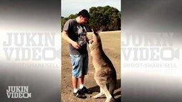 Смотреть Удар в пах от кенгуру