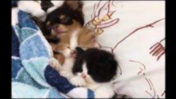 Смотреть Приколы с котами и псами