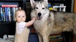 Смотреть Ребёнок треплет терпеливого пса