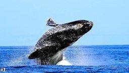 Смотреть Самые большие существа на Земле