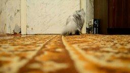 Смотреть Это кошка умеет входить в комнату!