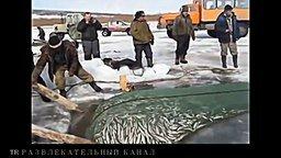 Несколько рыболовных приколов смотреть видео прикол - 6:39