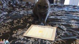 Смотреть Кот играет в игру на планшете