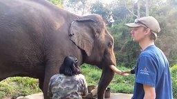 Смотреть Слон издаёт звуки динозавра