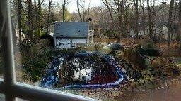 Смотреть Птицы атакуют бассейн