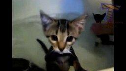 Смотреть Коты и кошки против воды