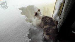 Смотреть Кошки против снега и сугробов