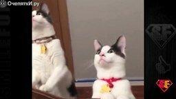 Хорошие приколы с кошками и котами смотреть видео прикол - 4:48