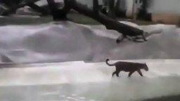 Смотреть Леопард поймал цаплю в зоопарке