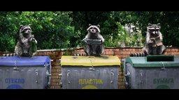Смотреть Еноты-барабанщики сортируют мусор