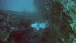 Смотреть Как взбесить подводного охотника