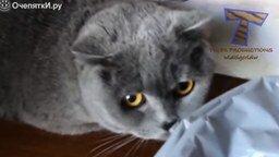 Виноватые кошки смотреть видео прикол - 4:00