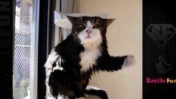 Смешные до слёз коты и кошки смотреть видео прикол - 5:45