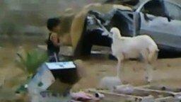 Мальчик против барана смотреть видео прикол - 0:26