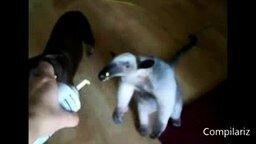 Смотреть Животные с человеческой походкой