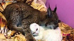 Смотреть Прикольные ролики про котов и кошек