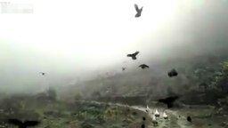 Кто сказал, что курицы не летают? смотреть видео прикол - 0:51