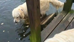 Собака-рыболов смотреть видео прикол - 0:39