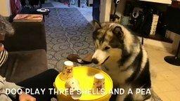 Смотреть Собака играет в стаканчики