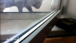 Смотреть Кот против опасной вещицы