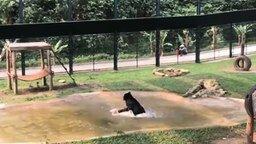 Смотреть Медведь после неволи