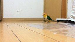 Смотреть Загадочное поведение попугая