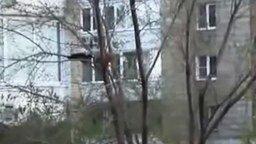 Ворона терроризирует кошку смотреть видео прикол - 1:40