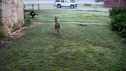 Игры оленёнка и пса смотреть видео прикол - 4:09