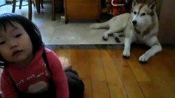 Смотреть Ребёнок играет, собака поёт