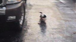 Собачонка на льду смотреть видео прикол - 0:43