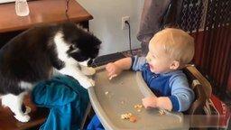 Смотреть Подборка приколов на кошачью тему