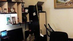 Смотреть Основательная игрушка для кота