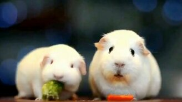 Смотреть Свинка задумалась о жизни