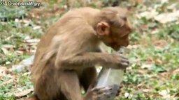 Смотреть Забавные обезьянки