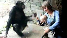 Смотреть Спокойный и ребёнок и обезьяна