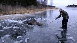 Спасли лося, провалившегося под лёд