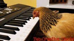 Курица-пианистка смотреть видео - 1:04