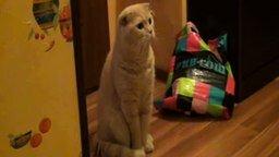 Смотреть Когда кот в шоке