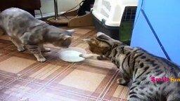 Смотреть Приколы с котами и кошками для всех