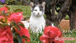 Смотреть Кошачьи казусы и приколы