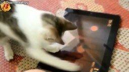 Смотреть Коты и кошки в подборке прикольностей