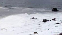 Смотреть Вытащил из ледяной воды пса