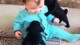 Щенята атакуют мальчугана смотреть видео прикол - 0:15